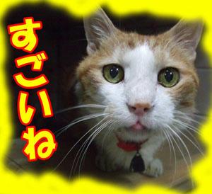 w川・o・川w オォーーー!!