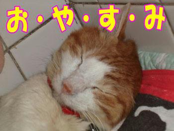 ヾ(*~▼~)おやすみいーっ(~▼~*)ノ~''