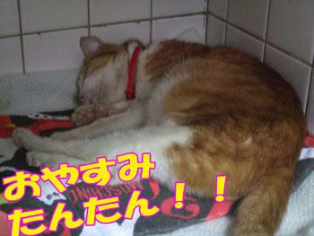 満腹の寝顔!