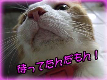 ...... ( 〃..)ノ ハンセイ