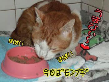 いっぱい食べなさい。(^^)ニコ