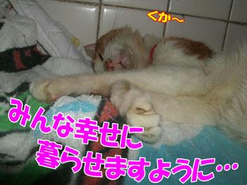 幸せの象徴…?(^▽^;)