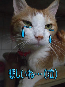 タンタン、泣かないで…