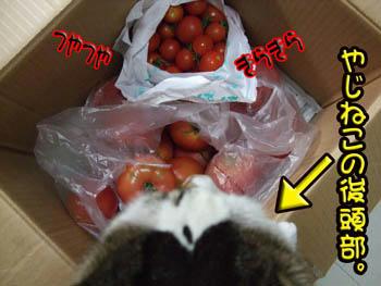 いいトマトね。