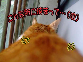 ムカムカ…((o(-゛-;)