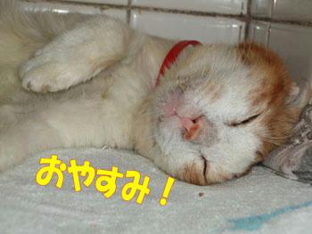 ~(=^‥^)ノ☆ おやすみニャ