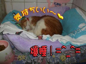 いつもの爆睡王!(笑)