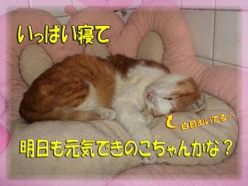 ~(=^‥^)ノ☆ おやすみニャ。