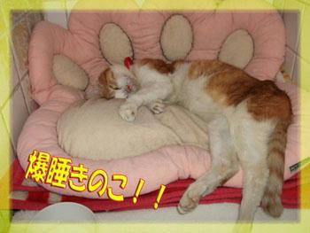 おやすみ!タンタン!