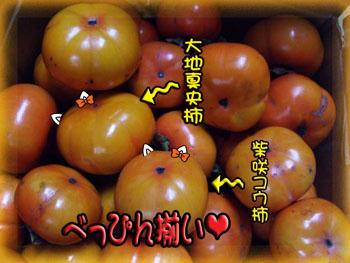 今年の柿は最高!