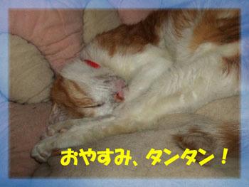 いい夢を!