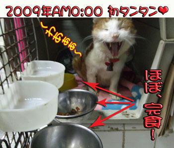 こんばんわぁo(^-^ o )