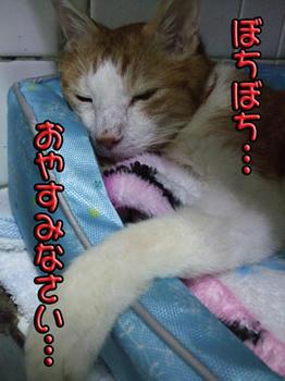 オ(*゚o゚)ヤ(*゚O゚)ス(*゚。゚)ミ(*゚ー~)^☆