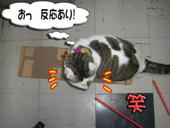 こずるいじど~