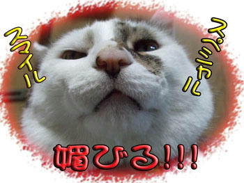 ヾ(^▽^*おわはははっ!!