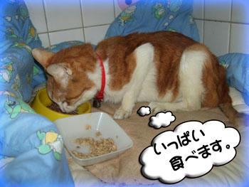 いっぱい食べなさい。(⌒-⌒)ニコニコ...