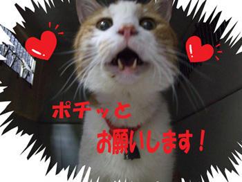 カワイイ O(≧▽≦)O ワーイ♪