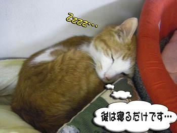 (^-^*)(・・*)(^-^*)(・・*)ウンウン♪