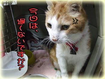 (゚人゚)(-人-)ゴメンネ