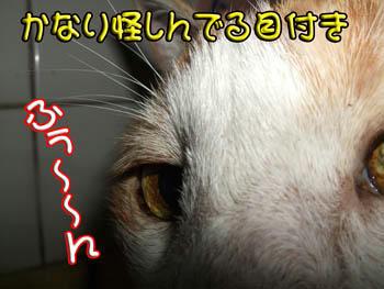 アヤシイ!!!( ノ──__──)ゝジトッー!!