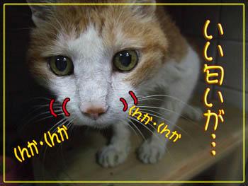《《《《♪♪(*´▽`*)ノ゛うふふ~
