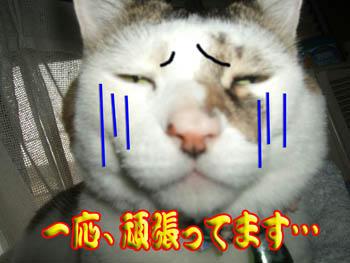 プー!(*≧m≦)=3