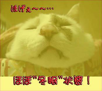 """今から""""冬眠""""???"""