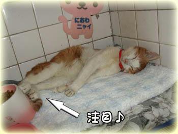 2008年 10月16日のタンタン❤ アンヨを冷やしてる?(笑)