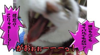 ぉお!!(゚ロ゚屮)屮 逆ギレッ!