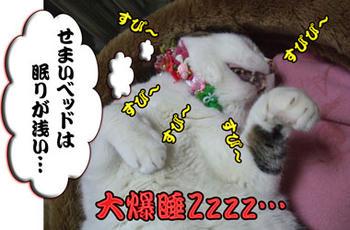 ヽ(∴`┏Д┓´)ノ彡☆コラーッ!