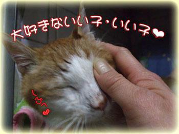 2008年 1月 14日のタンタン♪ タンタンが居れば温かかった。。