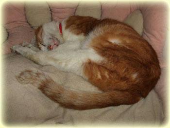 2008年 1月 18日のタンタン♪ タンタンは穏やかな眠り♪