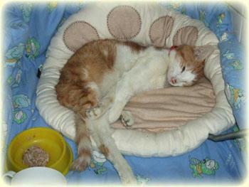 2008年 1月 21日のタンタン❤ 幸せの黄色いお茶碗と爆睡。ご飯が残ってますよ(笑)