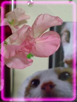 「春」のお花をどうぞ♪