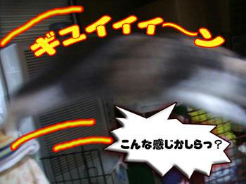オオオォォォ!!(ノ゚□゚)ノ ゴマは出演できるかも!