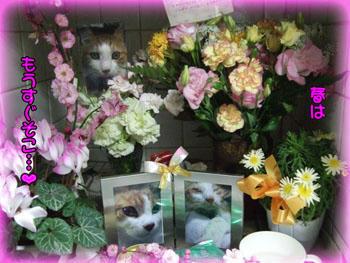 rummyさん、たま母ちゃん。まだお花が咲いてますよ~(´ ▽`).。