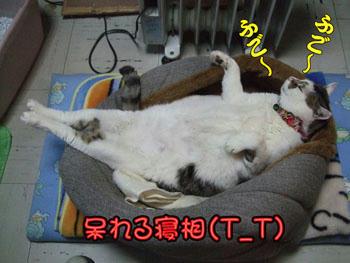 そんな格好で寝てる子はいないよ~、ヒドイ・・・||||(・・、)