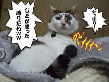 (#`皿´) ムキーーーー!  シッポがヘンなくせに生意気なッ!