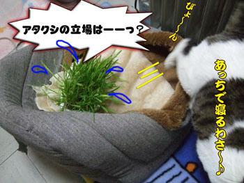 ネコ草さん、すんまそん。