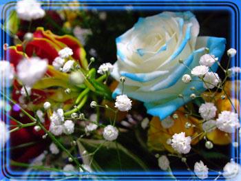 (ノ゚ρ゚)ノ ォォォ・・確か青い薔薇は出来ないんじゃなかったの?