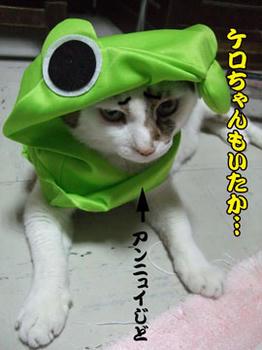 似合ってるわよ~.。゚+.(゚ー゚)。+.゚ イイ!!