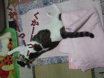 いきなりの爆睡?
