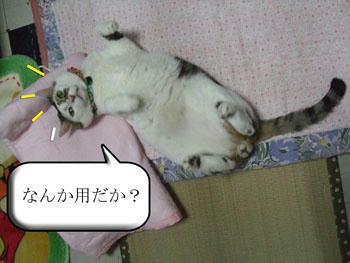 (  ゚ ▽ ゚ ;)エッ!!