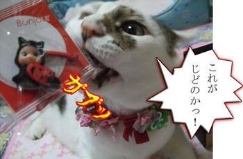 ヾ(。`Д´。)ノ彡☆ブーブーッ!!