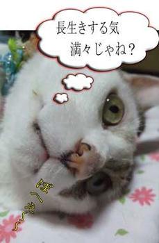 ヾ(゙ε゙*)ヾ(*゙ε゙*)ヾ(*゙ε゙)ノハイ ハイ ハイ!