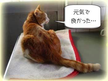 そうだね、ネコの体調不良は自分が具合悪いよりイヤだよ…