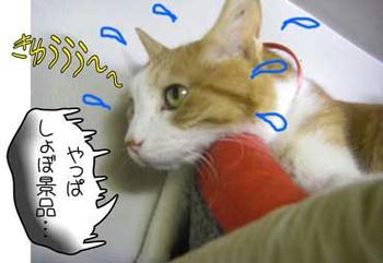 \(;゚∇゚)/ヒヤアセモン☆