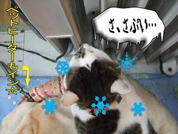 あ~、雪まで降っちゃった~(汗