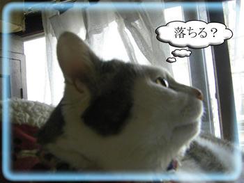 こらーーーッ!(`(エ)´)ノ_彡☆ブーブー!!