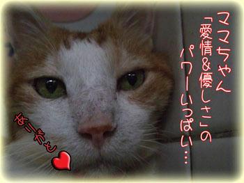 ここはタンタンからのお礼で!\(;゚∇゚)/ヒヤアセモン☆